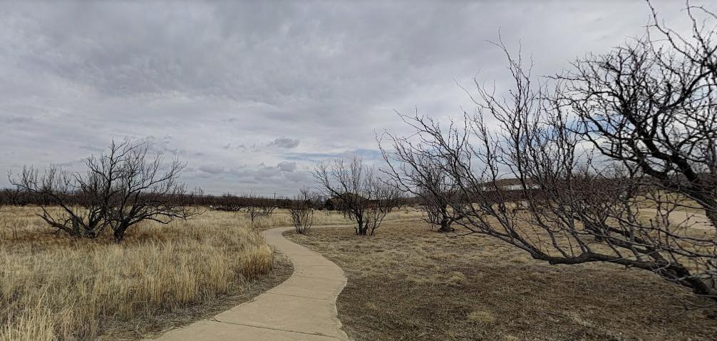 Wild Cat Bluff, Amarillo, Texas, dead trees